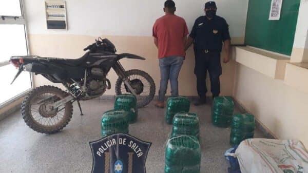 Hojas de coca en Salta