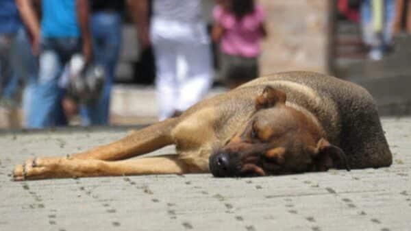 Crueldad animal en Salta